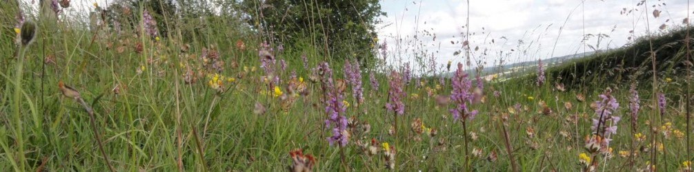 Roadverge Orchids